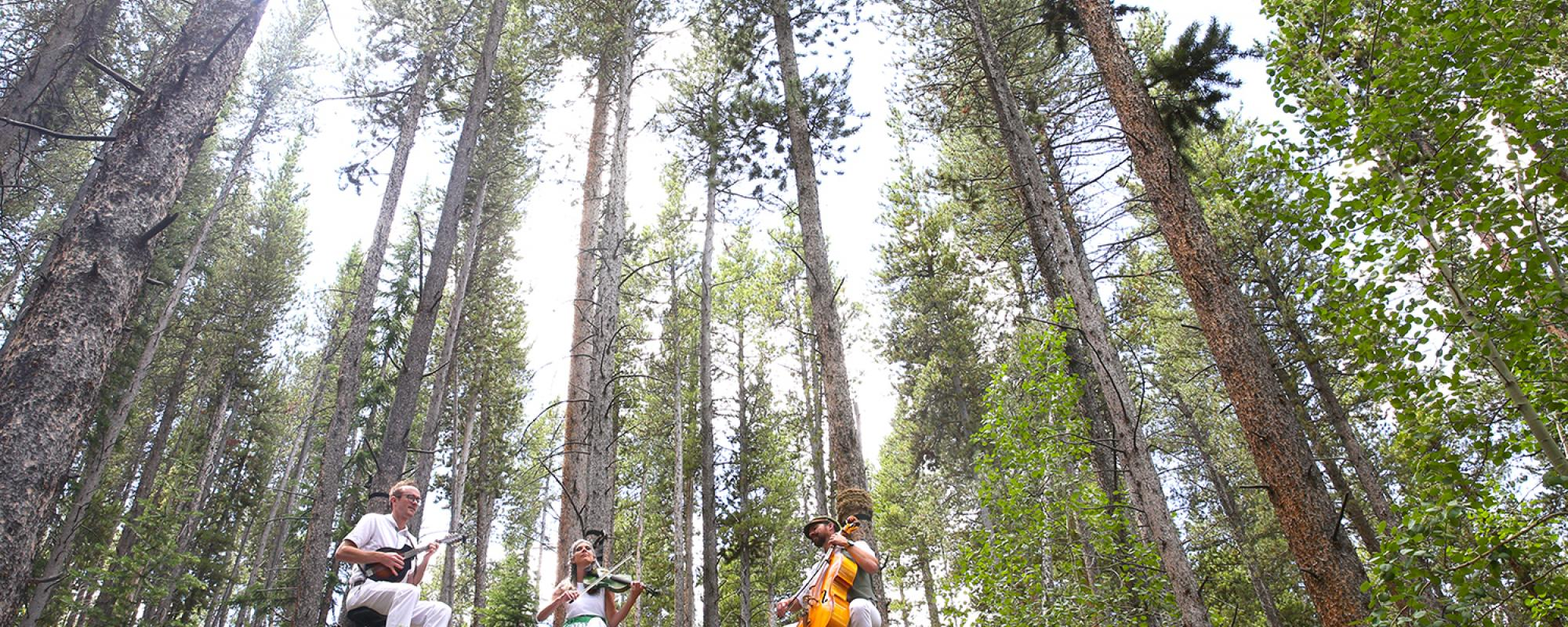 Musicians in the tress