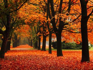 Bright orange fall foliage