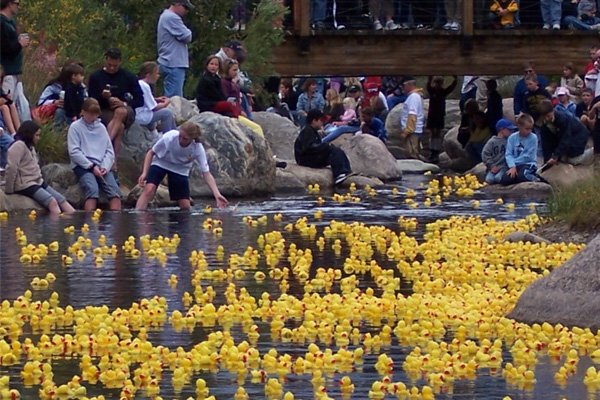 Breckenridge Rubber Duck Race